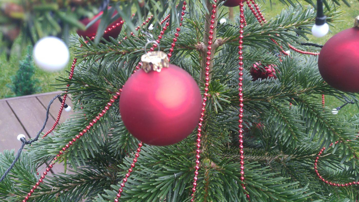 Sven, ein stacheliger grüner Weihnachtsheld
