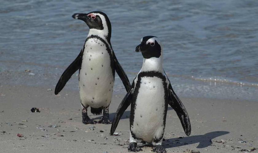 Happy soapy World Penguin Day!!